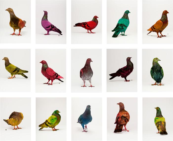pigeon_safari_01