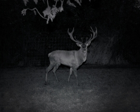 Animal In The Dark #2
