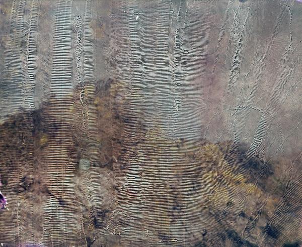 william-arnold-gorse-chemigram-fuji-fp100c_600