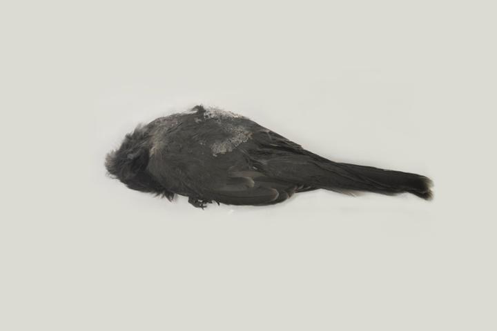 mass_bird_graves