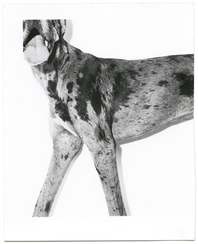dog_03