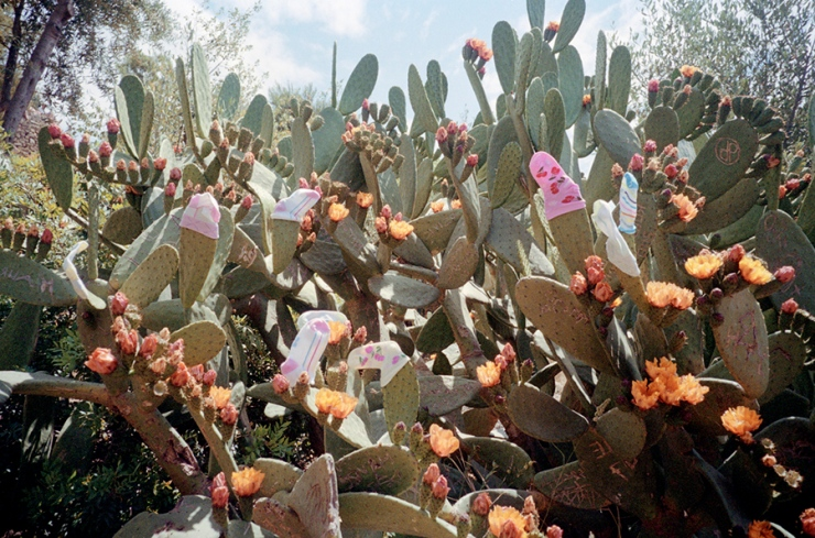 cactus-dressing-w900_900