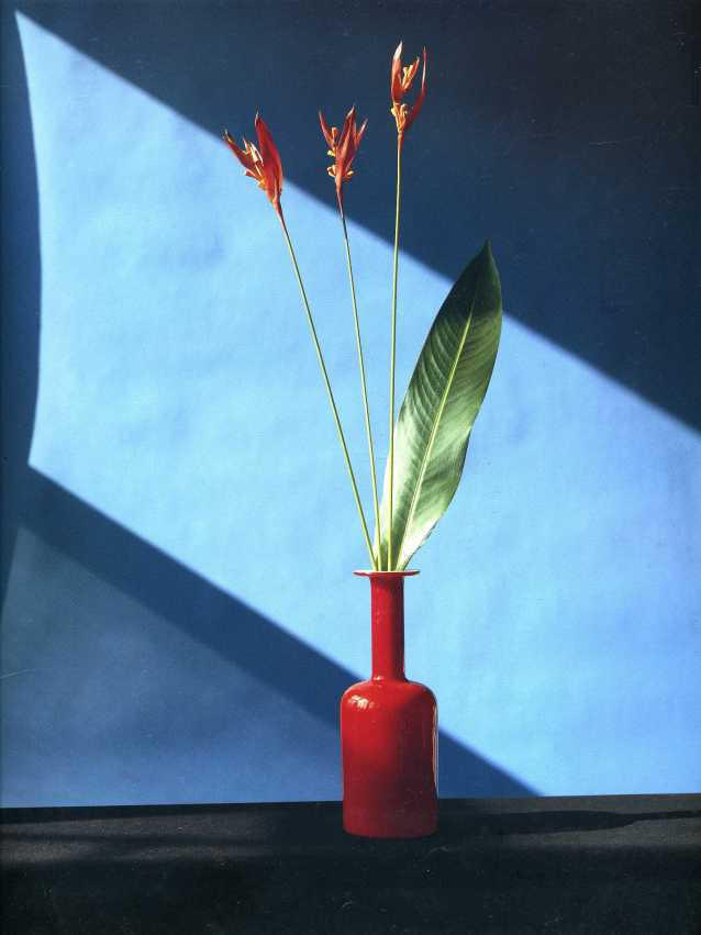 robert-mapplethorpe6