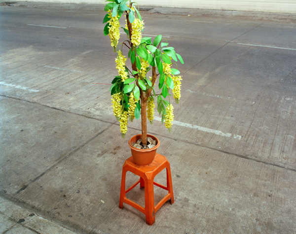 38_plant