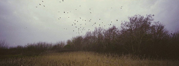 © Richard Billingham, Birds, 2008.