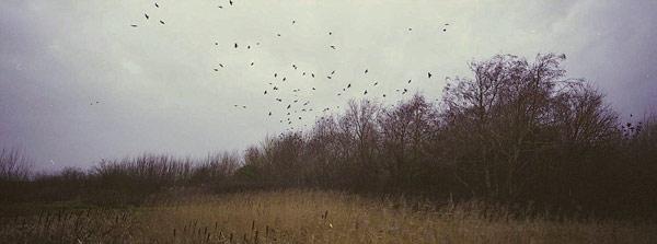 © Richard Billingham, Birds, 2008.