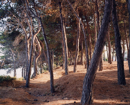 © Richard Billingham, Tree boles, 2001.