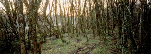 © Richard Billingham, Trees, 2012.