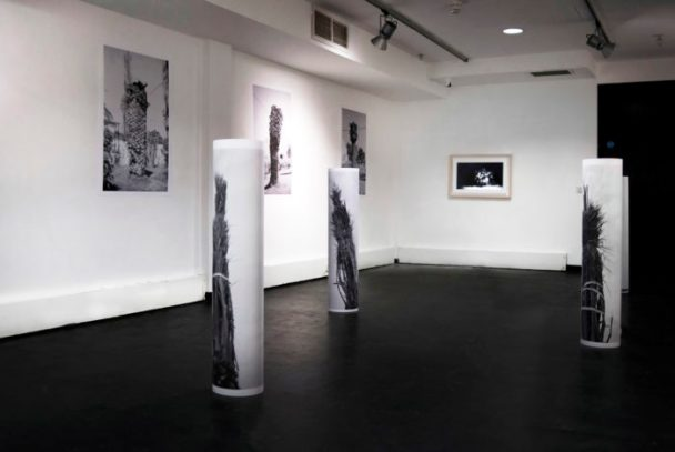 © Natalia Poniatowska, installation view from 'Twelve Dying Palm Trees' @ Project Room 2.