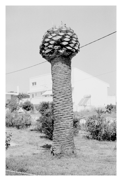 © Natalia Poniatowska, from 'Twelve Dying Palm Tree'.
